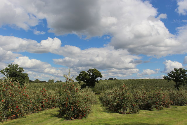 Great Woodend farm orchards in August