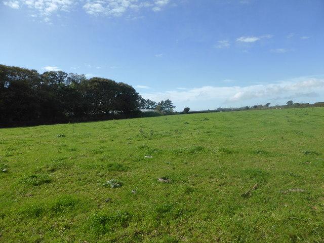 Field near Boskenna Nurseries