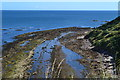 NT7871 : Low-tide rocks at Cove by David Martin