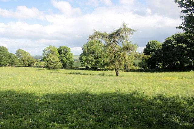 Pasture Fields