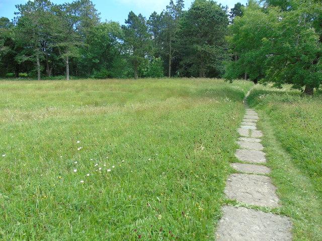 Meadows in flower (2)