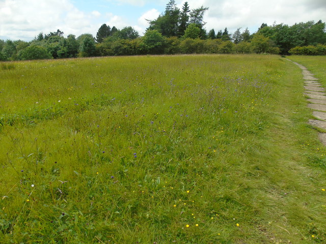 Meadows in flower (3)