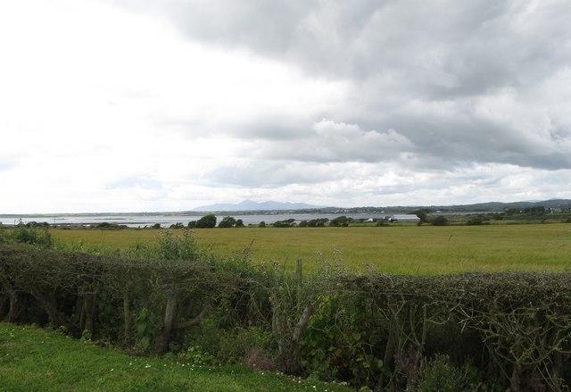 Grassland West of the Ballyquintin Farm Road