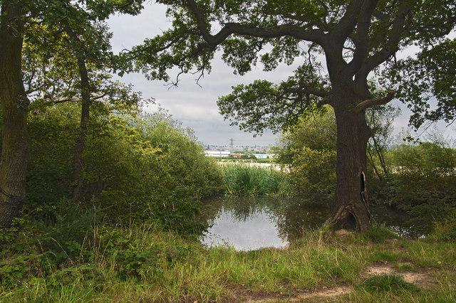 A pond by Landican Lane