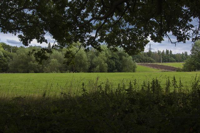 Stanley Wood viewed from Landican Lane