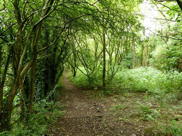 Woodland footpath