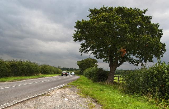 An oak tree on Station Road