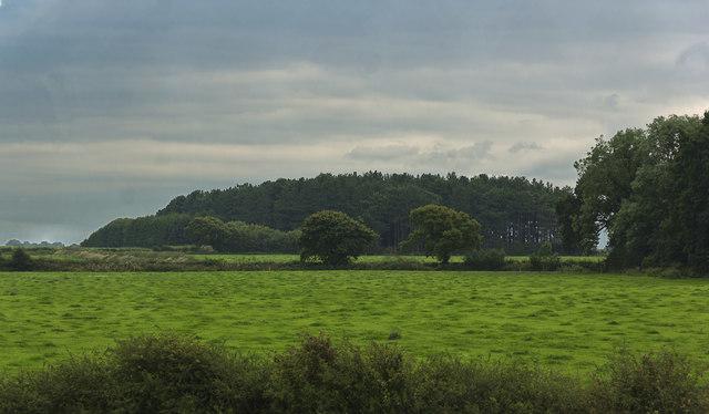 Woodland on Ley Farm