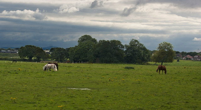 A field with horses grazing
