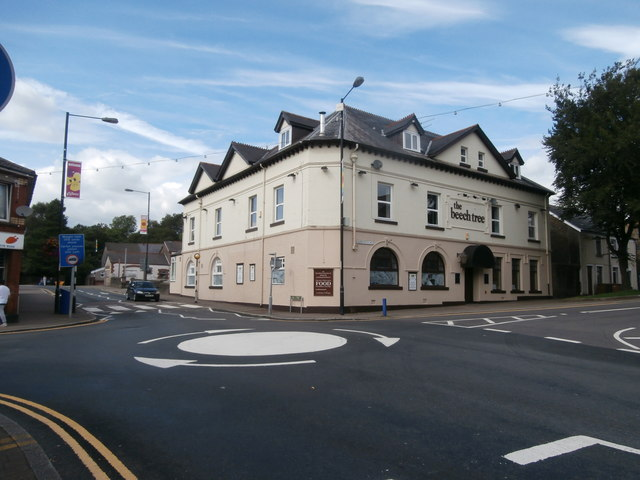 The Beech Tree, Ystrad Mynach