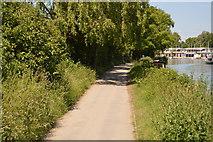 SP5104 : Thames Path by N Chadwick