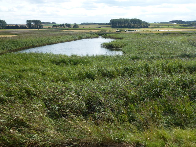 Reed bed and lagoon on Deepdale Marsh in Norfolk