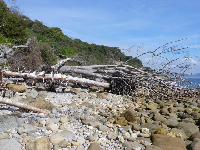 Landslipped Trees near Humble Rocks