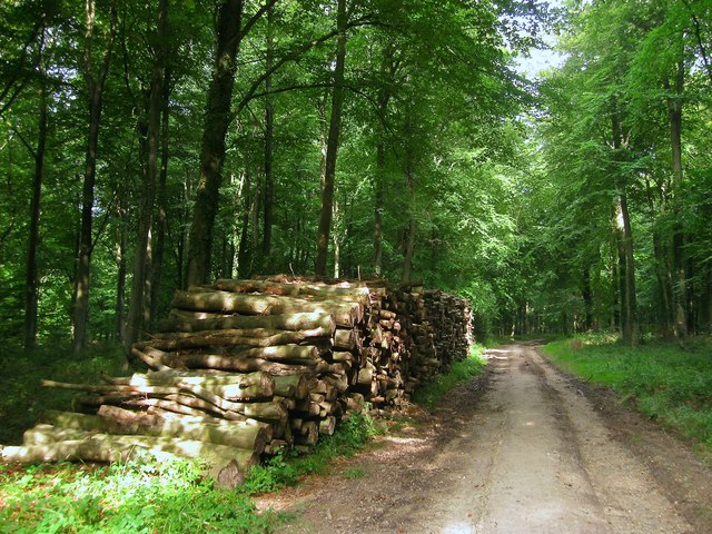 Timber Stacks, Barnstake Copse