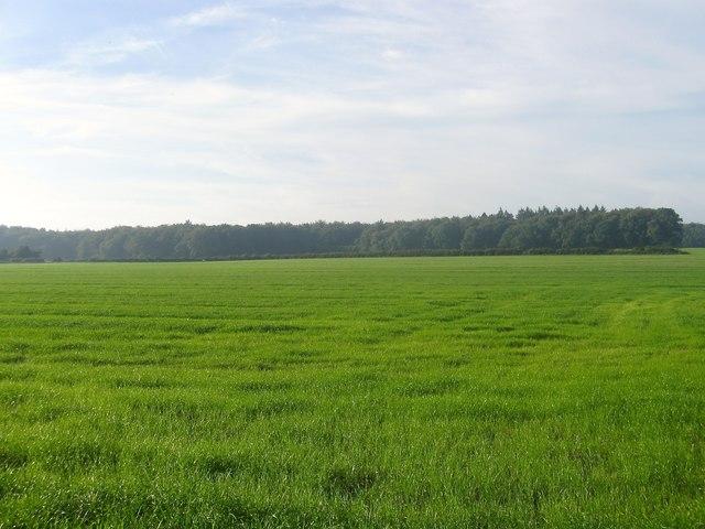 Cherry Common Field
