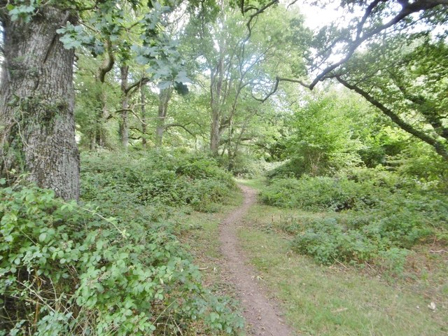 Cranborne, woodland path