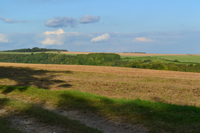 Field on Morestead Down