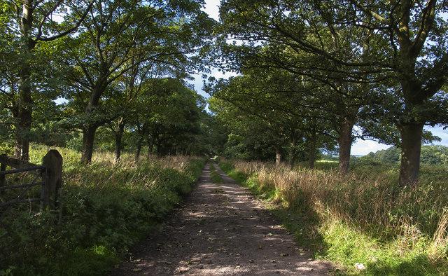 Track towards Storeton