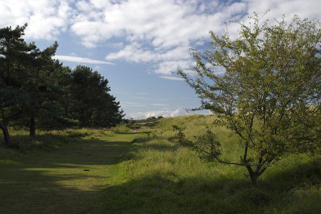 Path by Hedderwick Wood