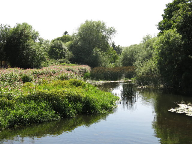 The River Colne south of Thorney Mill (2)