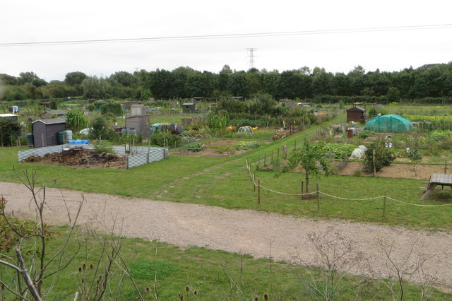 Allotments by Bromham Lake