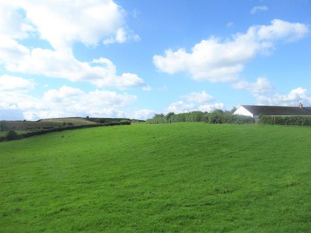 Drumlin grassland west of the A22