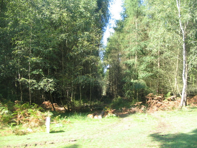 Forestry, Stockley Inclosure