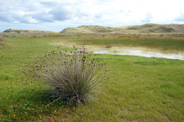 Pond in the Dunes