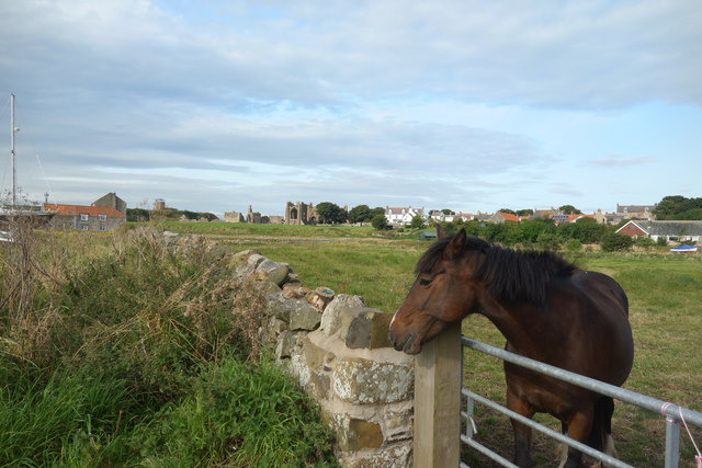 Looking over the gate