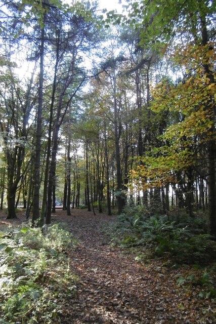 Path, Yellow Craig Plantation