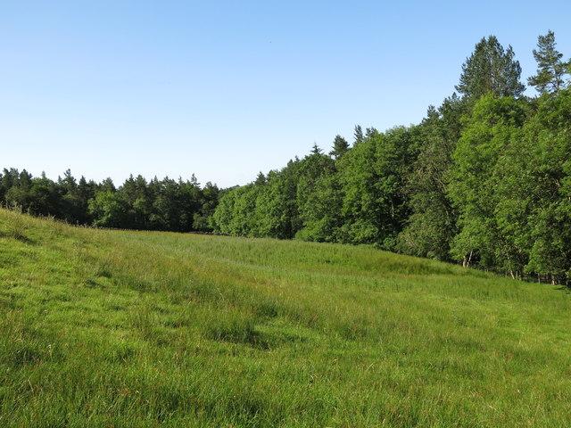 Fields east of Snaisgill Plantation