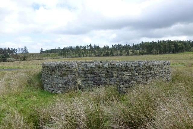 A very regular sheepfold (2)