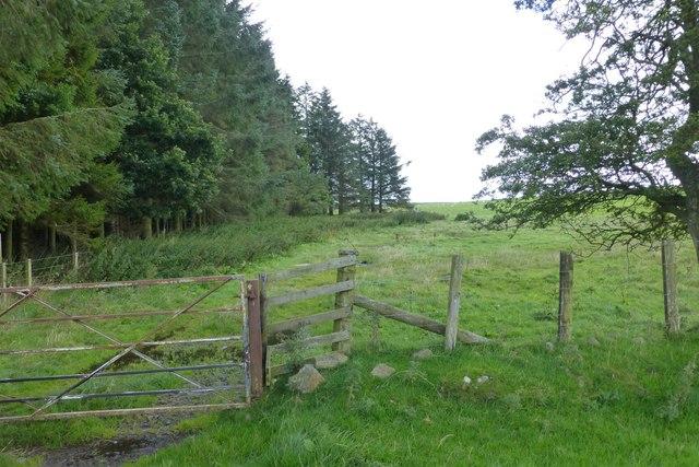 Gate to field beside a wood