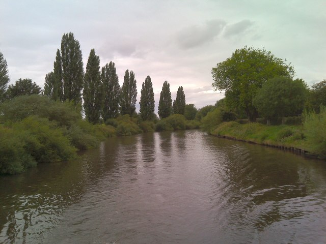 Poplars by the Ouse