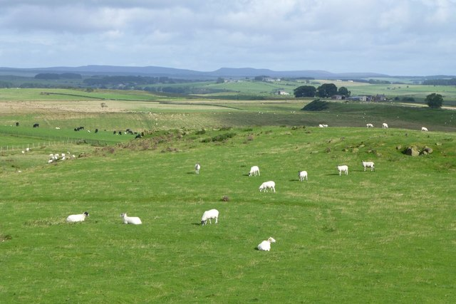Looking north over Bavington Crags