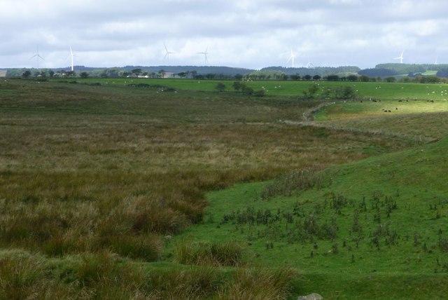 Rough grazing at Three Farms