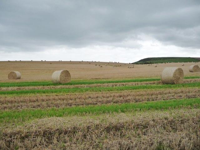 Dark skies over the harvest, above Hunt Cliff
