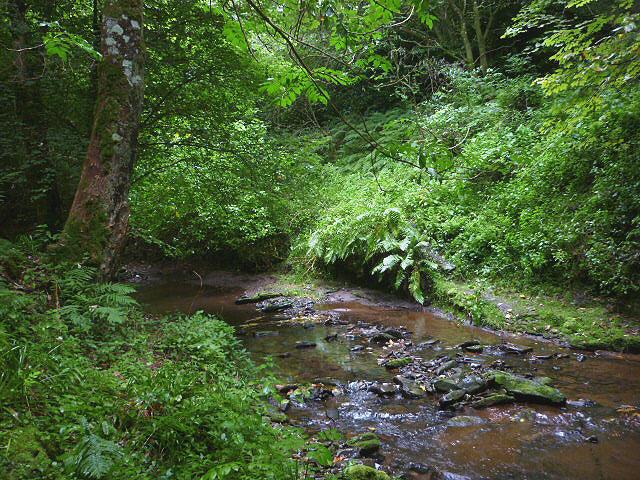 The Denholm Dean rainforest