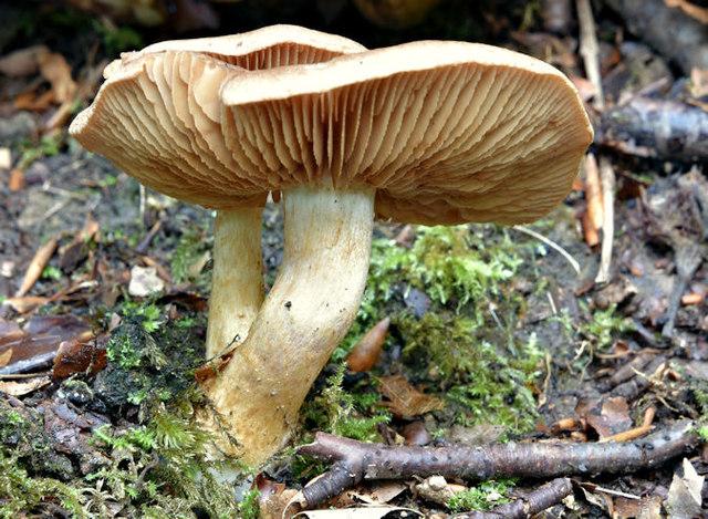 Fungi, Crawfordsburn - September 2017(8)