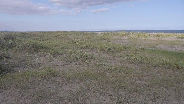 Young dunes, Tentsmuir Sands