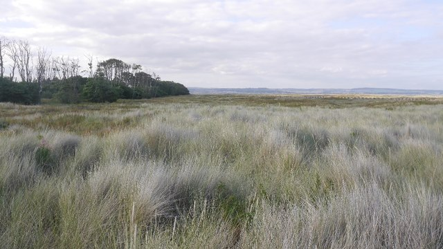 Links, Tentsmuir