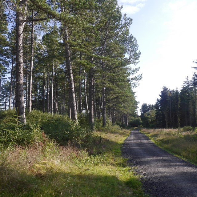 Logging road, Tentsmuir Forest