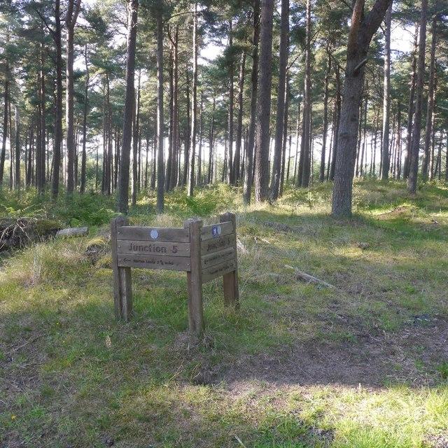 Junction 5, Tentsmuir Forest