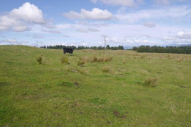 Rough grazing, Thornliemuir