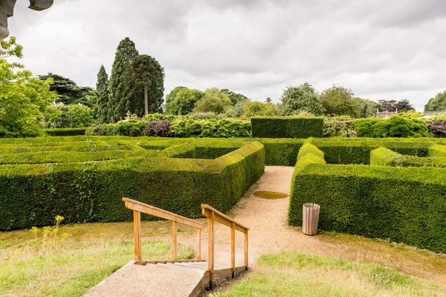 The yew hedge maze, from the centre