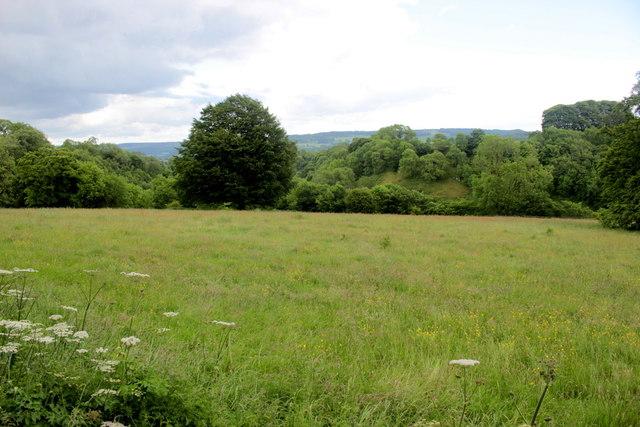 Field near Lomberdale