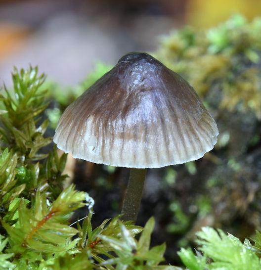 Fungi, Glenlyon, Holywood - September 2017(3)