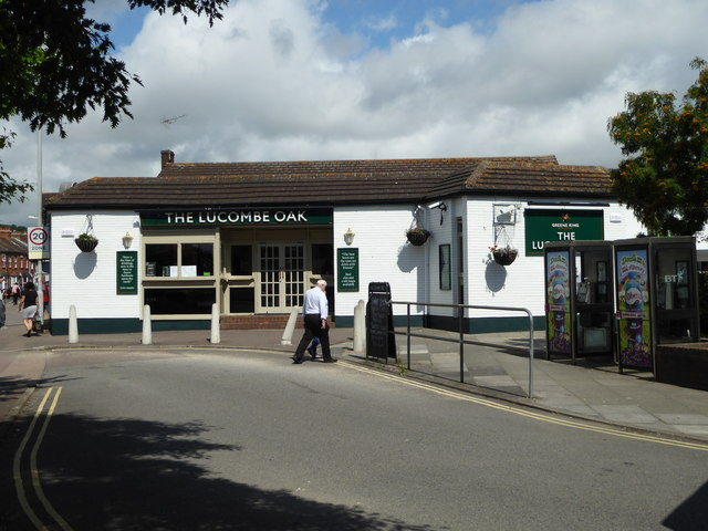 The Lucombe Oak