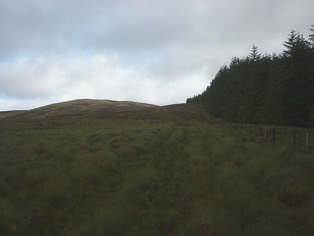 The forest edge, Long Moor