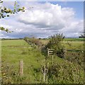 NS4043 : Hedge and ditch, Titwood by Richard Webb